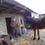 «Лошадь в помощь»