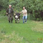 Корова и бычок